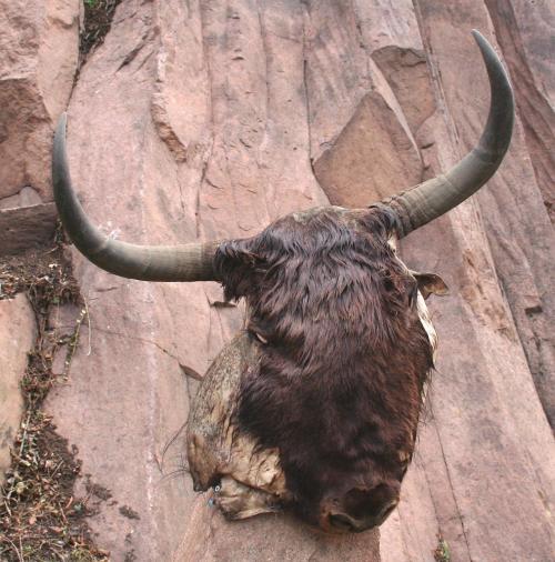 Sigmundskron, Firmian. Vysušená jačí hlava na Messnerově hradě.
