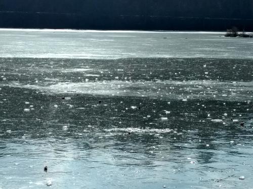 Kvalitní hladký led na Hamerském rybníku.